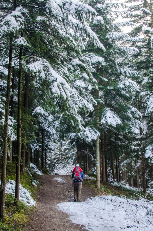 Winterwandern am Gfieder