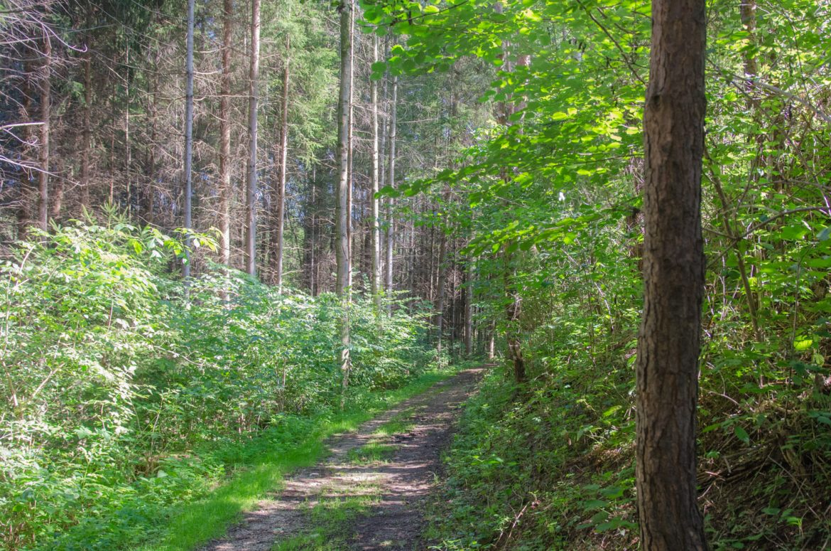 Wald in Bromberg